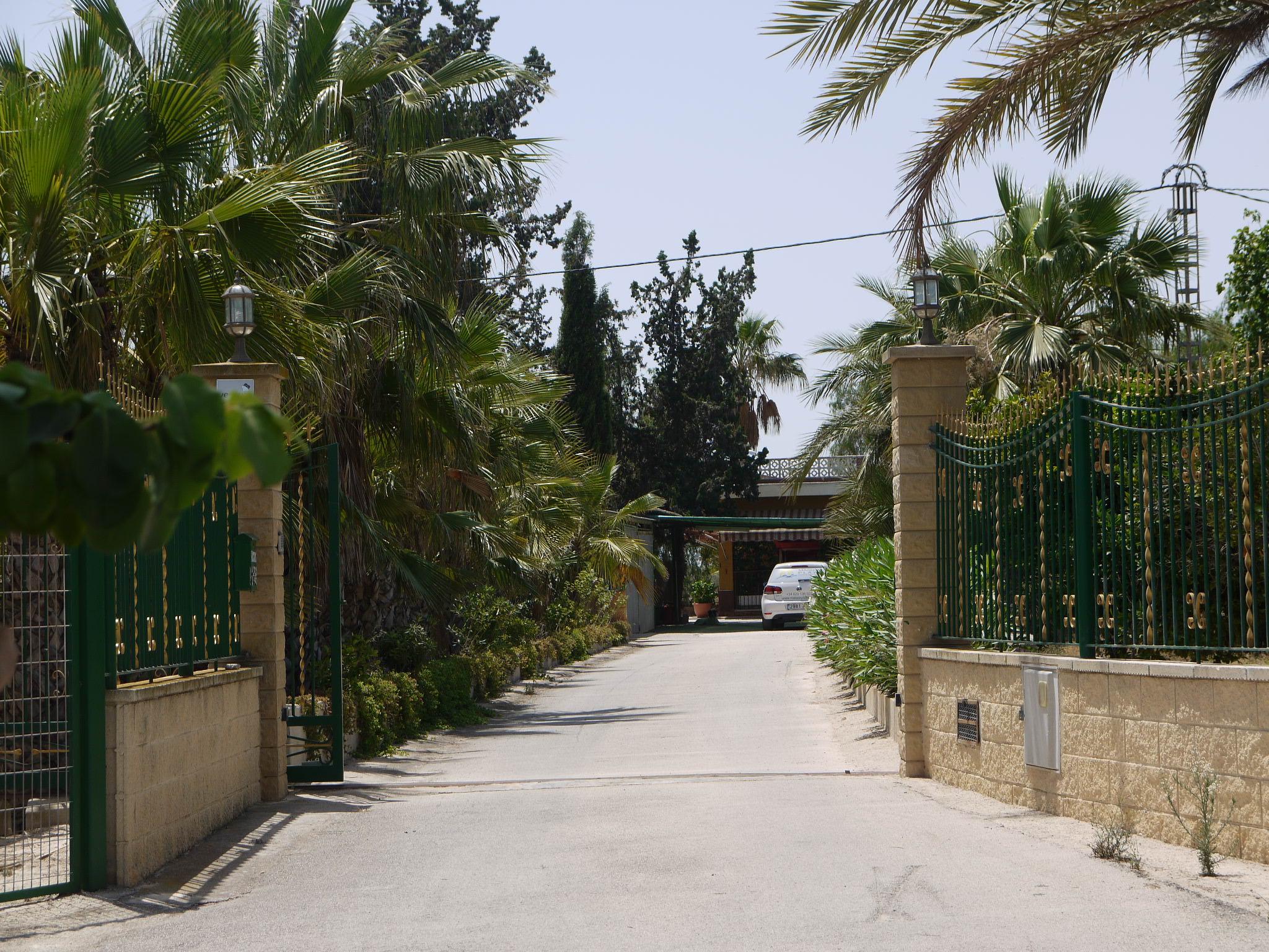 Preciosa finca productora de palmera con dos viviendas